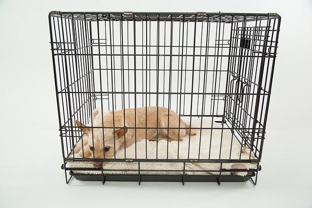 A quoi sert une cage d'intérieur pour chien?