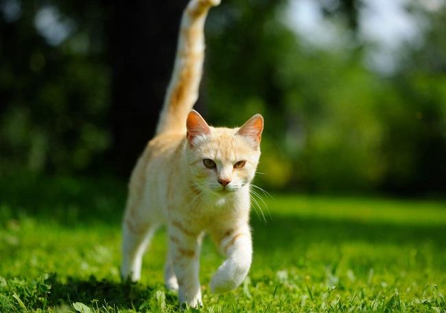 comment habituer son chat à sortir et à revenir à la maison 2